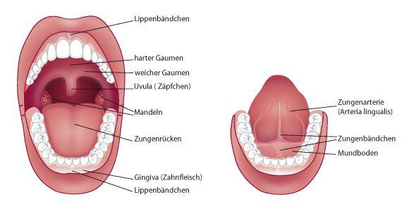 Mundschleimhauterkrankungen